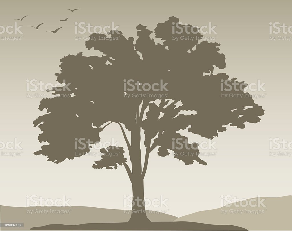 White oak tree #376, Vector royalty-free stock vector art