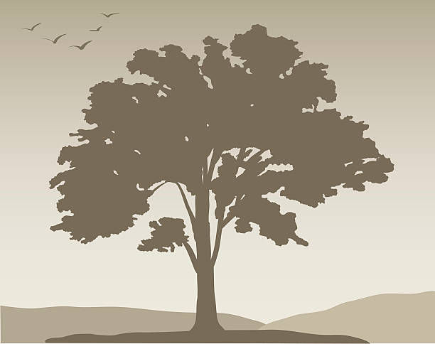 White oak tree #376, Vector vector art illustration