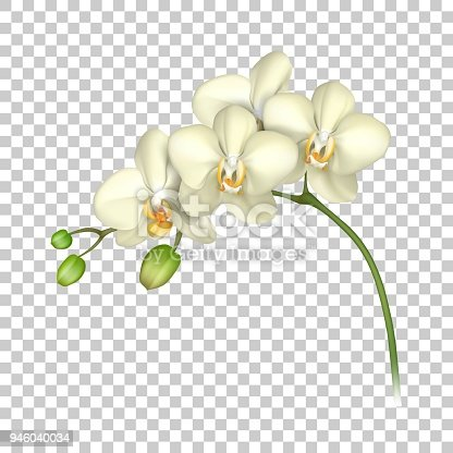 White Orchid Realistic Transparent Background Stock Vector ...
