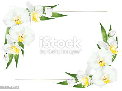 Square frame decorated with branches of tropical orchid flower known as moth orchid or white phalaenopsis orchid blossom with yellow middle and green leaves on white background. Vector illustrator.