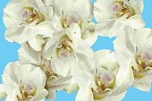 Seamless pattern of white orchids on a blue background