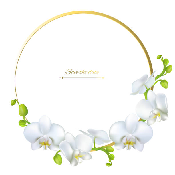 Royalty Free White Orchid Clip Art, Vector Images & Illustrations ...