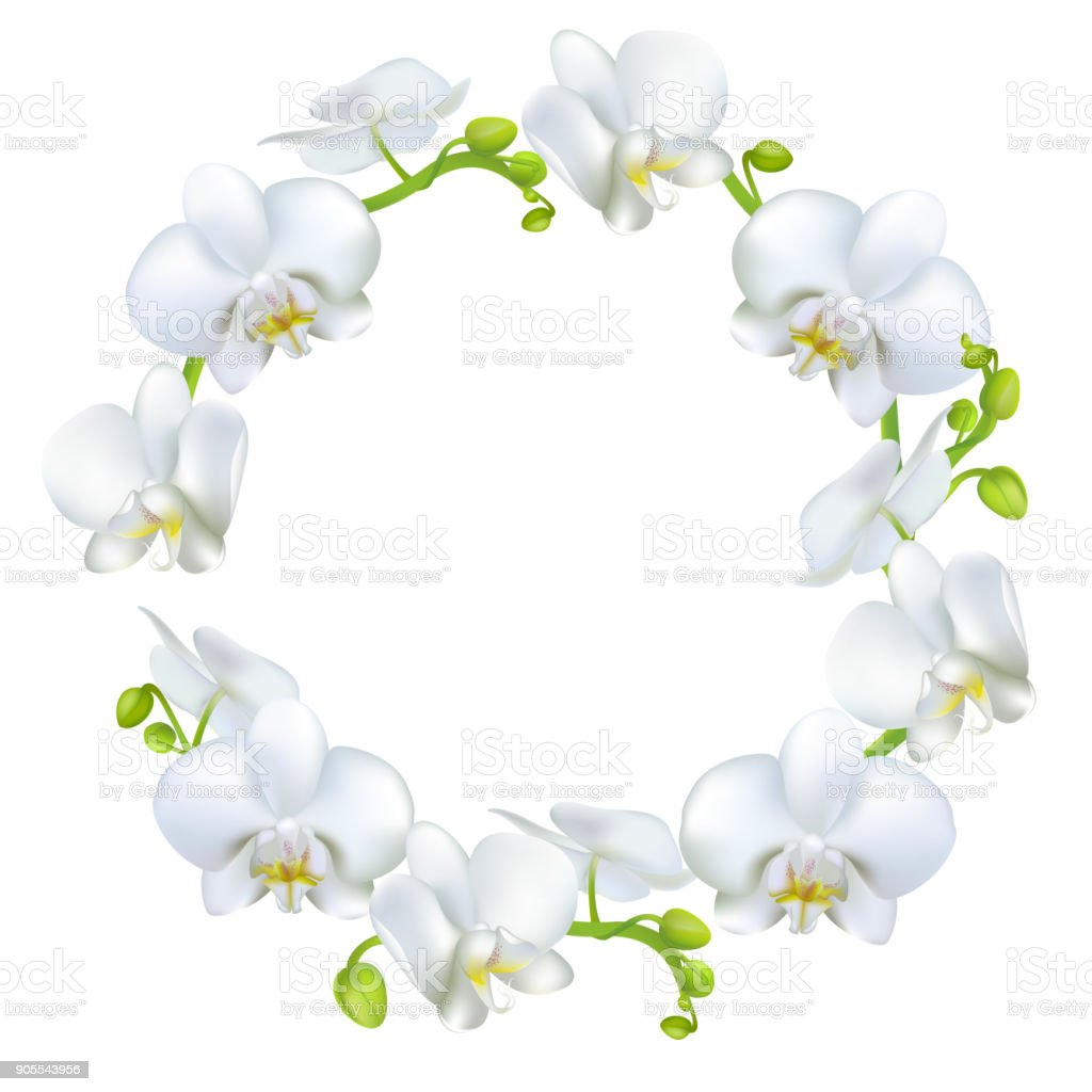White Orchids Tropical Flowers Exotic Plants Frame Border Vector