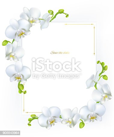White orchids. Tropical flowers. Exotic plants. Frame. Border. Vector illustration.