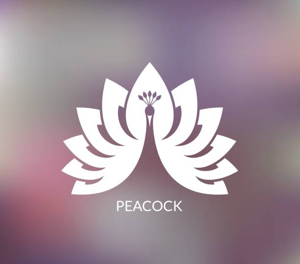 white peacock - peacock stock illustrations