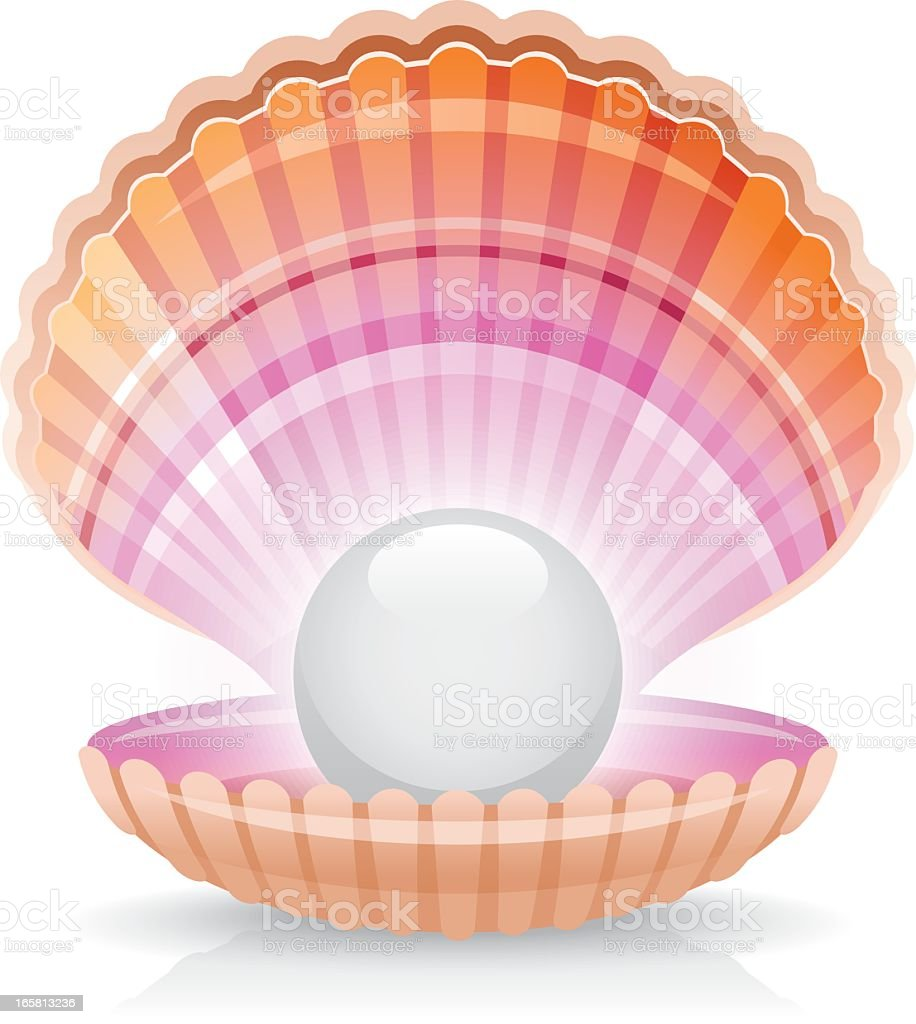 White Pearl In Shell Stock Vector Art & More Images of ...