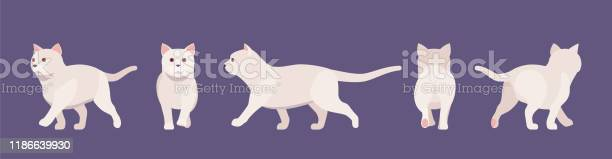 White pedigree cat walking vector id1186639930?b=1&k=6&m=1186639930&s=612x612&h=owbauho5wjt1pggfpdpyc5wrrb26igycuw wweg55ue=