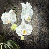 White Phalaenopsis Orchid On Old Wood