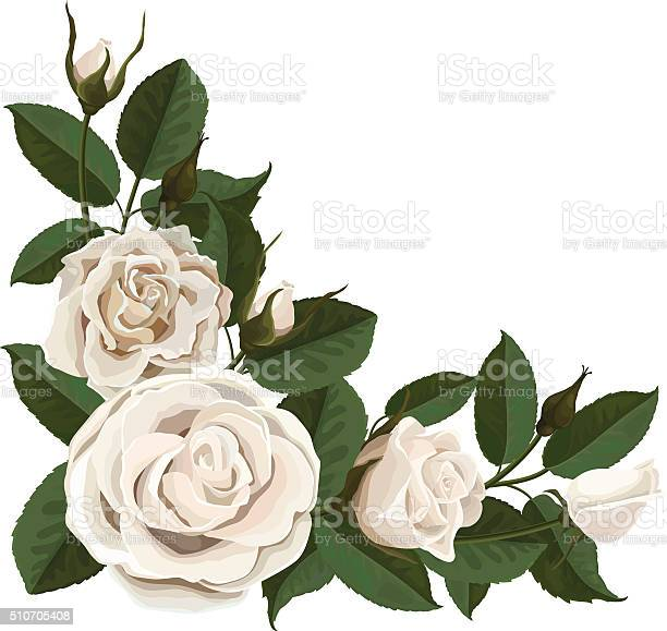 White rose buds and green leaves in the corner vector id510705408?b=1&k=6&m=510705408&s=612x612&h=lvzplsu pzok7xihnosrb l6eeehhkr7xcndvsrbdfu=