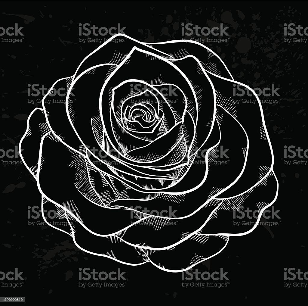 White Rose Contorno Con Pois Grigio Su Sfondo Nero Immagini
