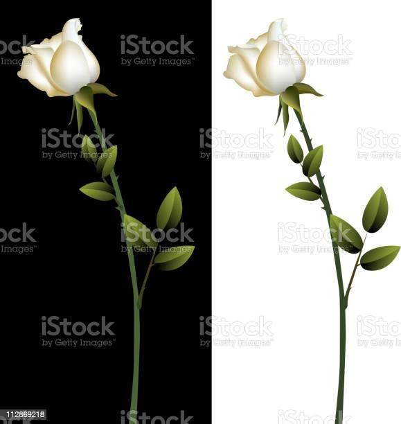 White rose vector id112869218?b=1&k=6&m=112869218&s=612x612&h=sctyxoyaoannkvf9zqgd4nqwmmmey0unnz7ojtq57qs=
