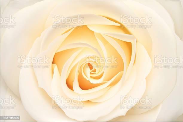 White rose vector illustration vector id165795499?b=1&k=6&m=165795499&s=612x612&h=sujqg7kkvppgchgvpxej 07o8mvrev yrr9je w dyi=