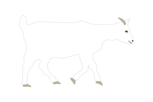 White Saanen goat isolated on white background side view, vector eps 10