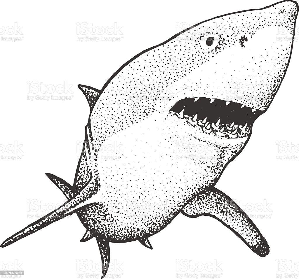 White Shark Engraving Illustration vector art illustration