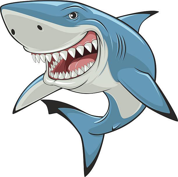 Great White Shark Illustrations, Royalty-Free Vector ...