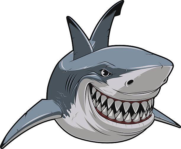 White shark Vector illustration, toothy smiling white shark swims great white shark stock illustrations