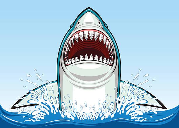 White shark Vector illustration, toothy white shark great white shark stock illustrations