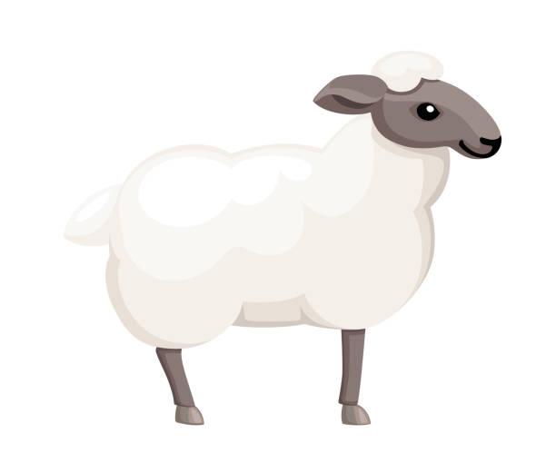 Des moutons blancs. Animal domestique de ferme. Design animal de style plat. Illustration vectorielle d'isolement sur le fond blanc - Illustration vectorielle