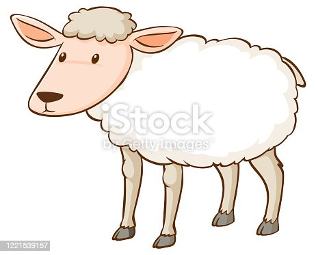 istock White sheep standing on white background 1221539157