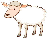 istock White sheep standing on white background 1221539157