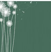 Dark Teal background with white silhouettes of dandelions and floating seeds.