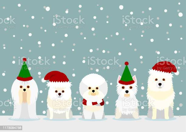 White small dogs with santa claus hat vector id1173094758?b=1&k=6&m=1173094758&s=612x612&h=zjk72tl onzybqp6geuow2 jm8 kzdqmcef5rp6ivdi=