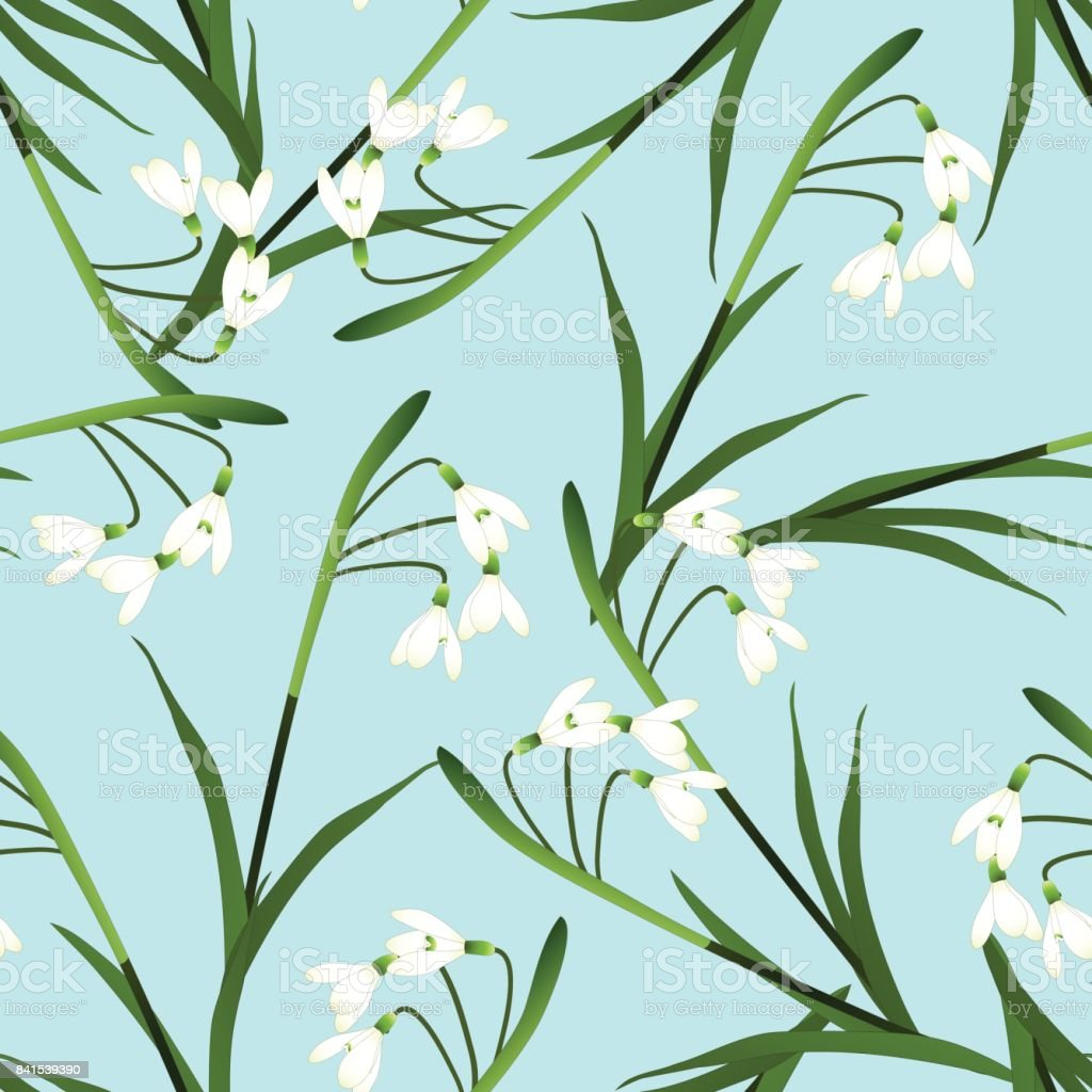 White Snowdrop Flower on Light Blue Background. Vector Illustration