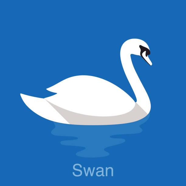 stockillustraties, clipart, cartoons en iconen met white swan swimming in the lake, bird series - wildplassen