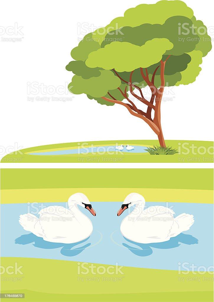 White swans in the pond park royalty-free stock vector art