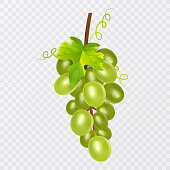 White table grapes, wine grapes. Fresh fruit, 3d vector icon set. Bunch of grapes ripe, vector illustration
