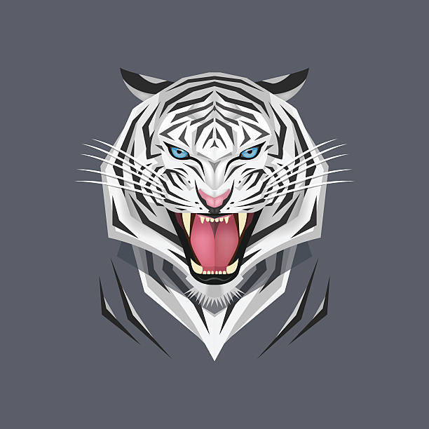 illustrations, cliparts, dessins animés et icônes de blanc, illustration vectorielle de tête de tigre - tigre blanc