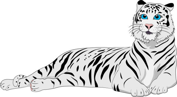 Royalty Free Background Of White Tiger Tattoo Designs Clip Art