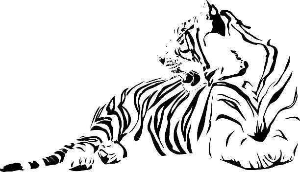 white tiger - tiger stock illustrations, clip art, cartoons, & icons