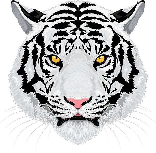 illustrations, cliparts, dessins animés et icônes de tigre blanc - tigre blanc