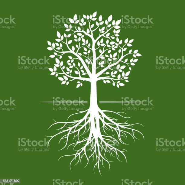 White tree with roots on green background vector id678171890?b=1&k=6&m=678171890&s=612x612&h=e9hoja x1ca4rigwcjnih 2nlrw stejavrykwiddci=