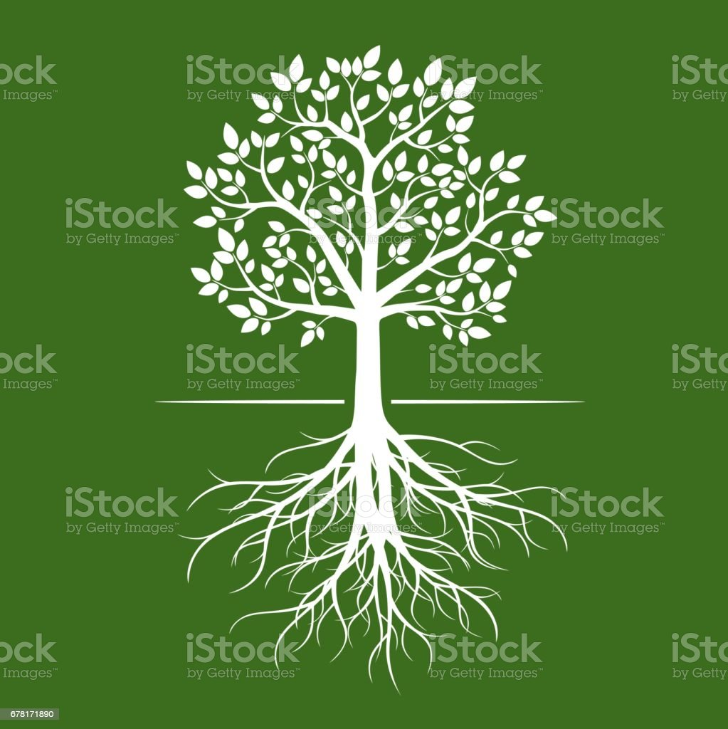 White tree with roots on green background. vector art illustration