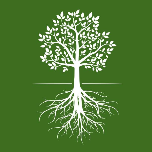 white tree with roots on green background. - tree stock illustrations, clip art, cartoons, & icons