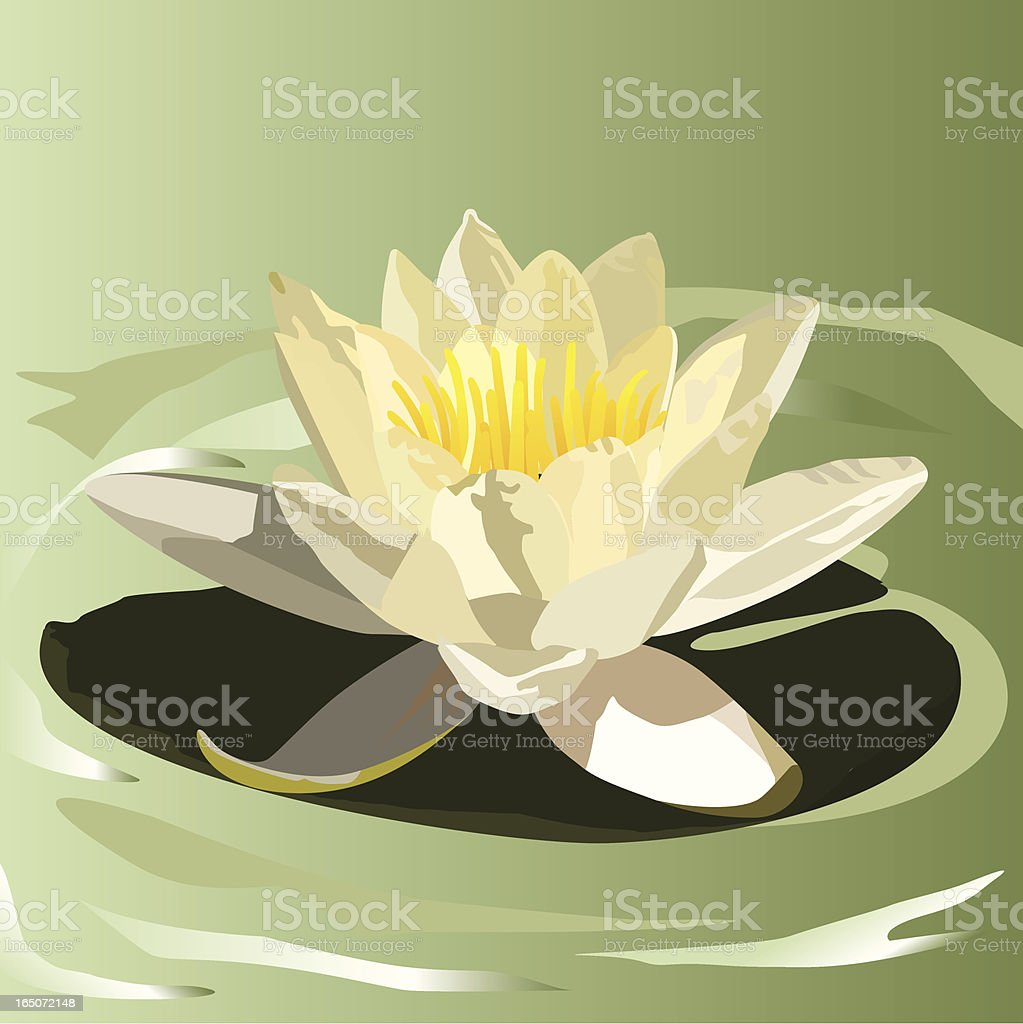 white waterlily royalty-free stock vector art