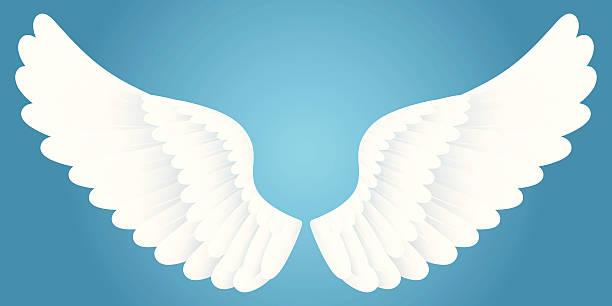 White wings. vector art illustration