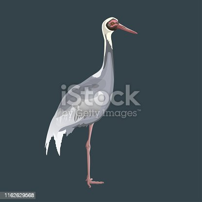 White-naped crane stands on one leg. Vector illustration isolated on dark background