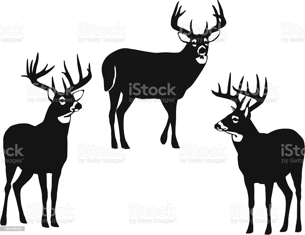 royalty free whitetail deer clip art vector images illustrations rh istockphoto com whitetail deer head clipart Deer Clip Art Black and White