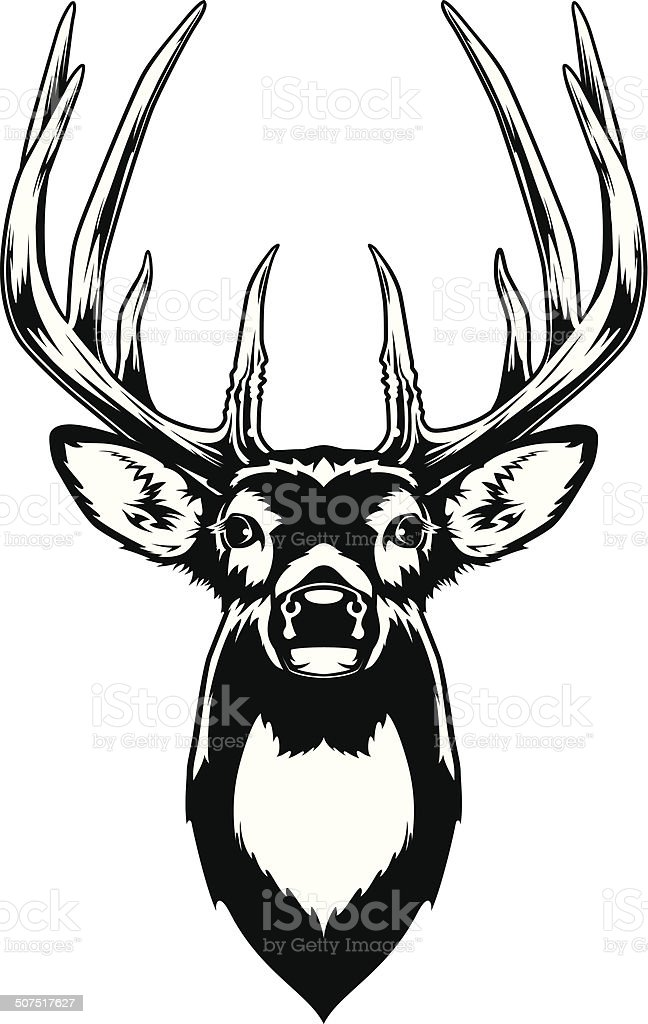 royalty free whitetail deer clip art vector images illustrations rh istockphoto com  white tailed deer clipart