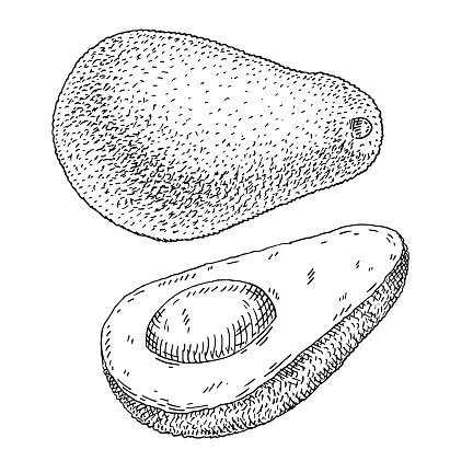 Whole and half avocado with seed. color vintage hatching illustration