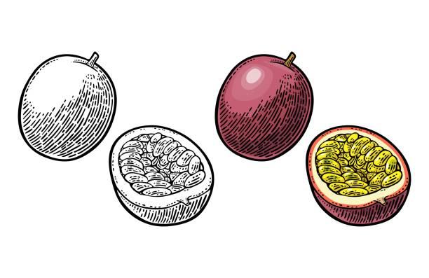 illustrations, cliparts, dessins animés et icônes de ensemble et moitié maracuja avec des graines. gravure de vecteur - fruit de la passion