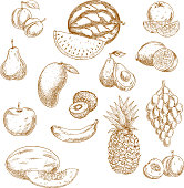 Vintage sketches of whole and halved fresh garden and tropical fruits with bunch of grape, orange, lemon, apple, peach, pear, mango, avocado, banana, pineapple, kiwi, watermelon, plum and melon. Retro drawing icons for recipe book, vegetarian menu, agriculture design