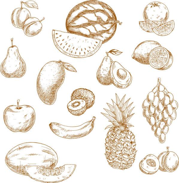 bildbanksillustrationer, clip art samt tecknat material och ikoner med whole and halved fresh fruits vintage sketch icons - kivik