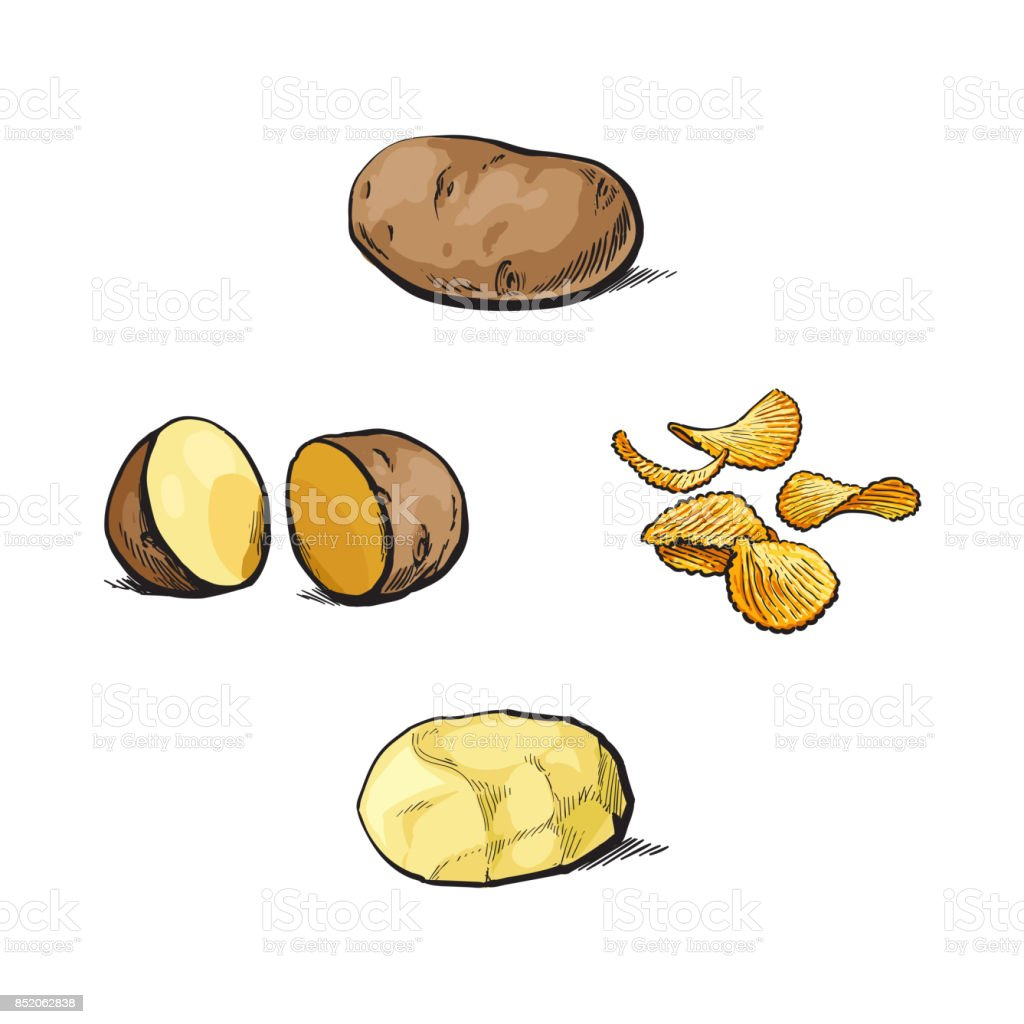 Whole, cut, peeled and unpeeled potato and chips vector art illustration
