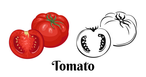 ilustrações de stock, clip art, desenhos animados e ícones de whole tomatoes and halves isolated on  white background. color illustration of red vegetable and black and white icon. vector image in cartoon simple flat style. - sauce tomatoes