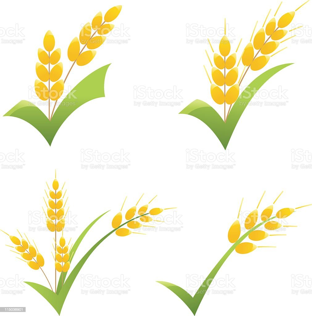 Whole Wheat Grain Symbol On Green Check Clipart Icons Stock Vector ...