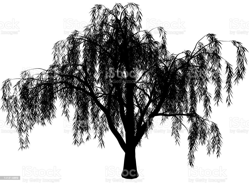 royalty free willow tree clip art vector images illustrations rh istockphoto com willow tree clipart willow tree clipart